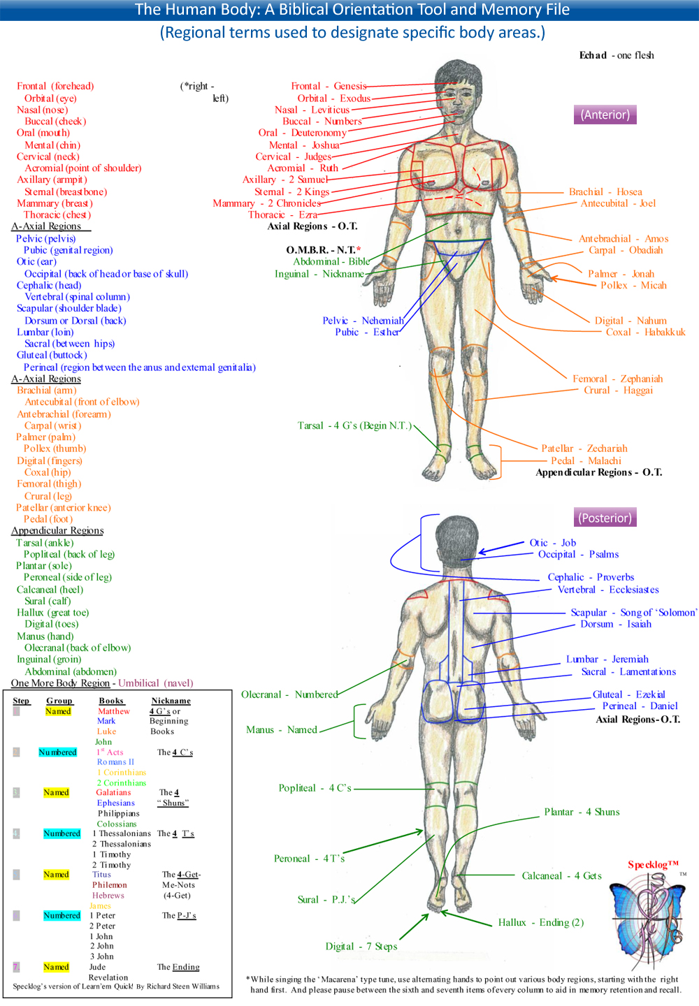 Anatomy Directional Terms Practice Choice Image - human body anatomy